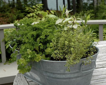 Choosing A Container For Your Herbs