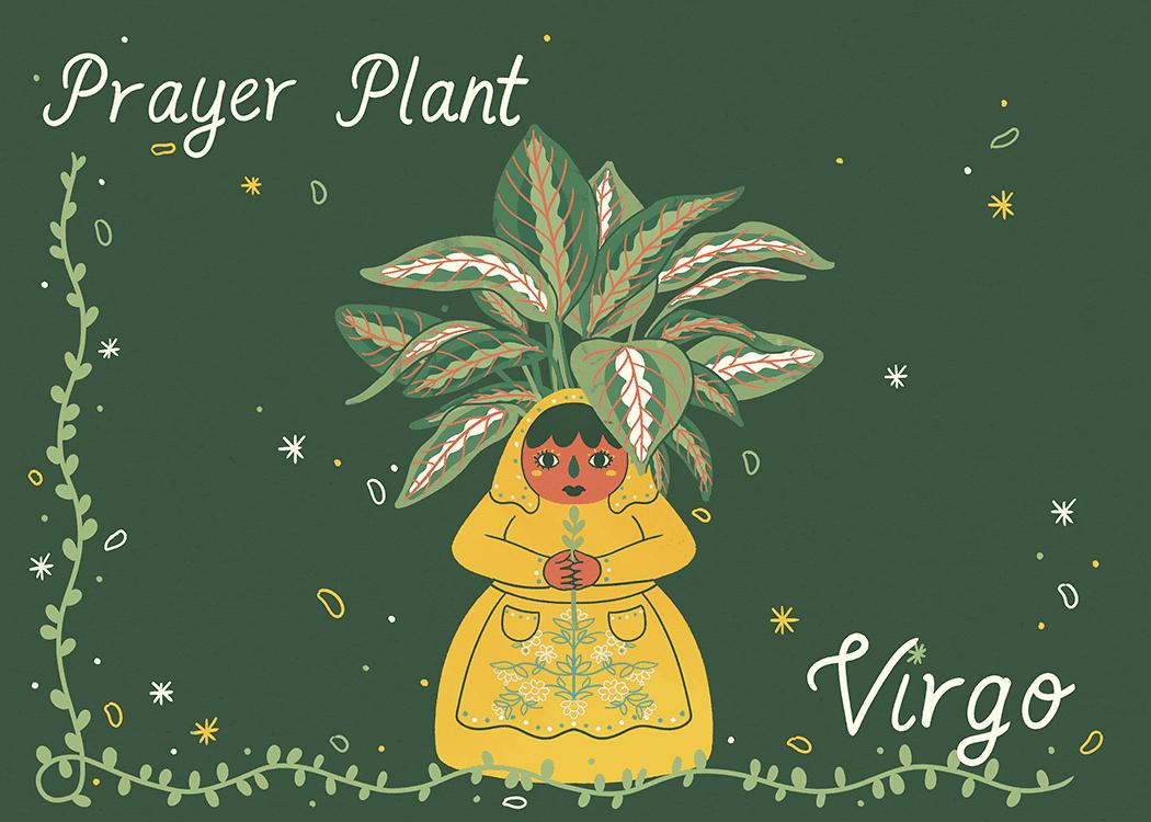 virgo prayer plant illustration