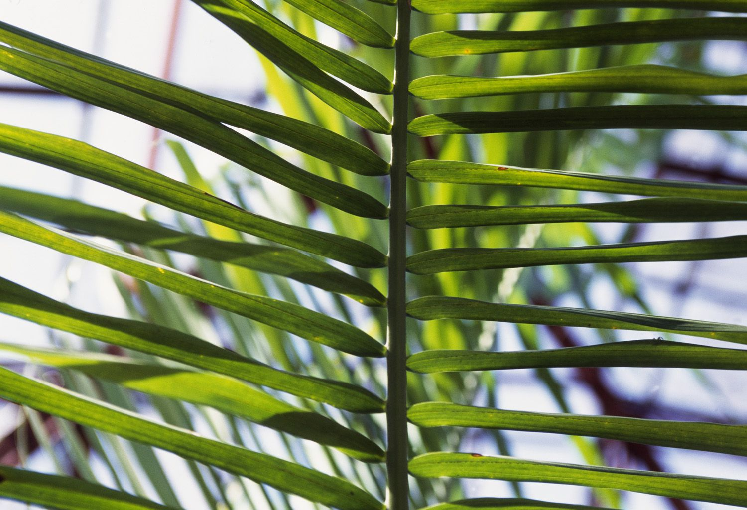How to Grow and Care for Areca Palms Parlor Palm House Plant Leaf Discoloration on