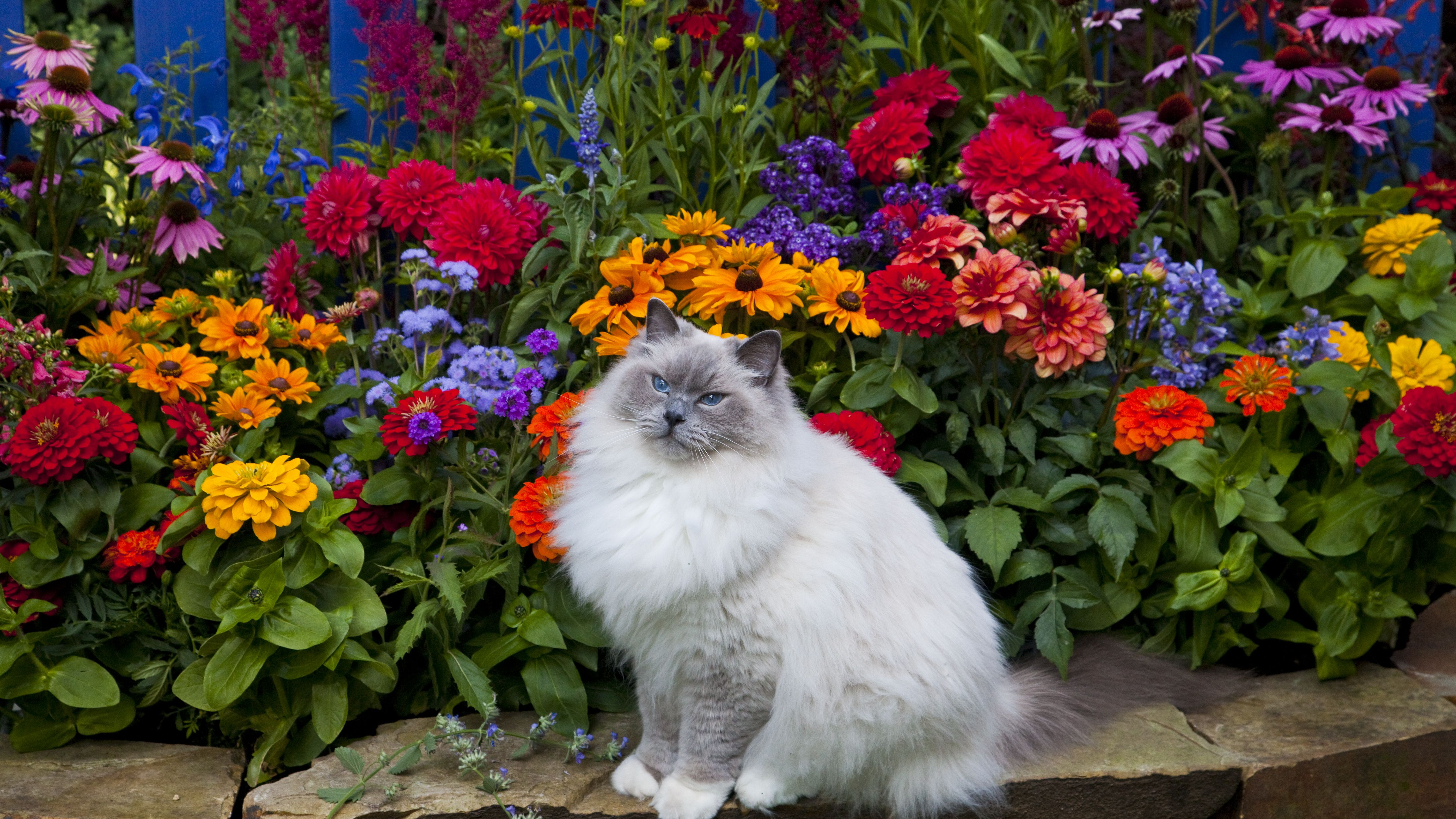 Methods To Keep Cats Out Of Flower Beds