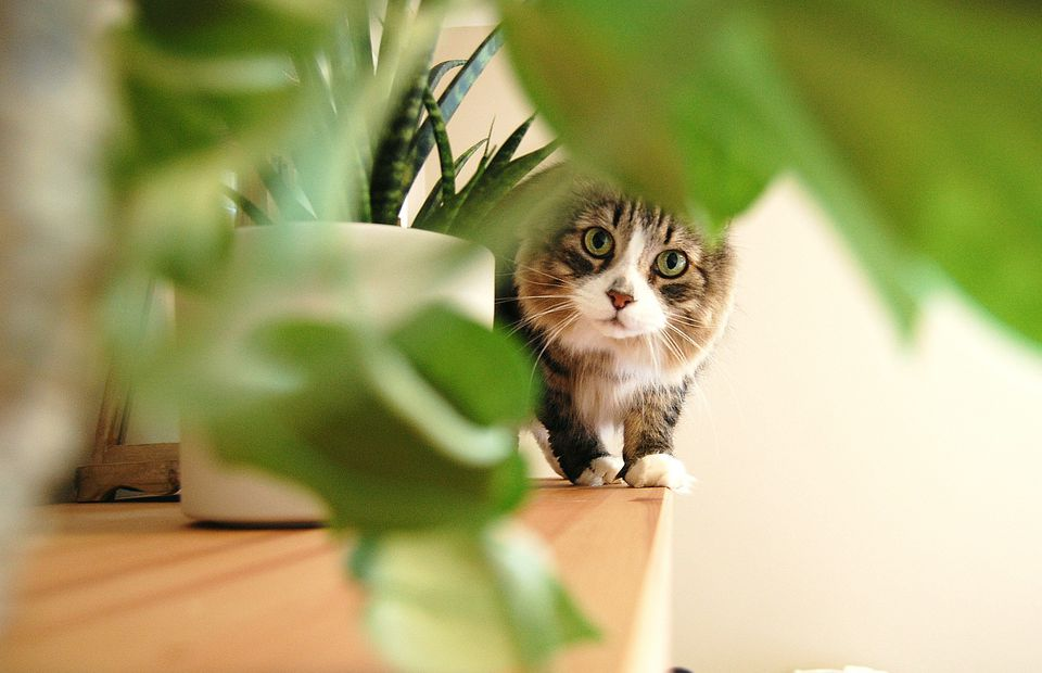 A cat stares through leaves at the camera.