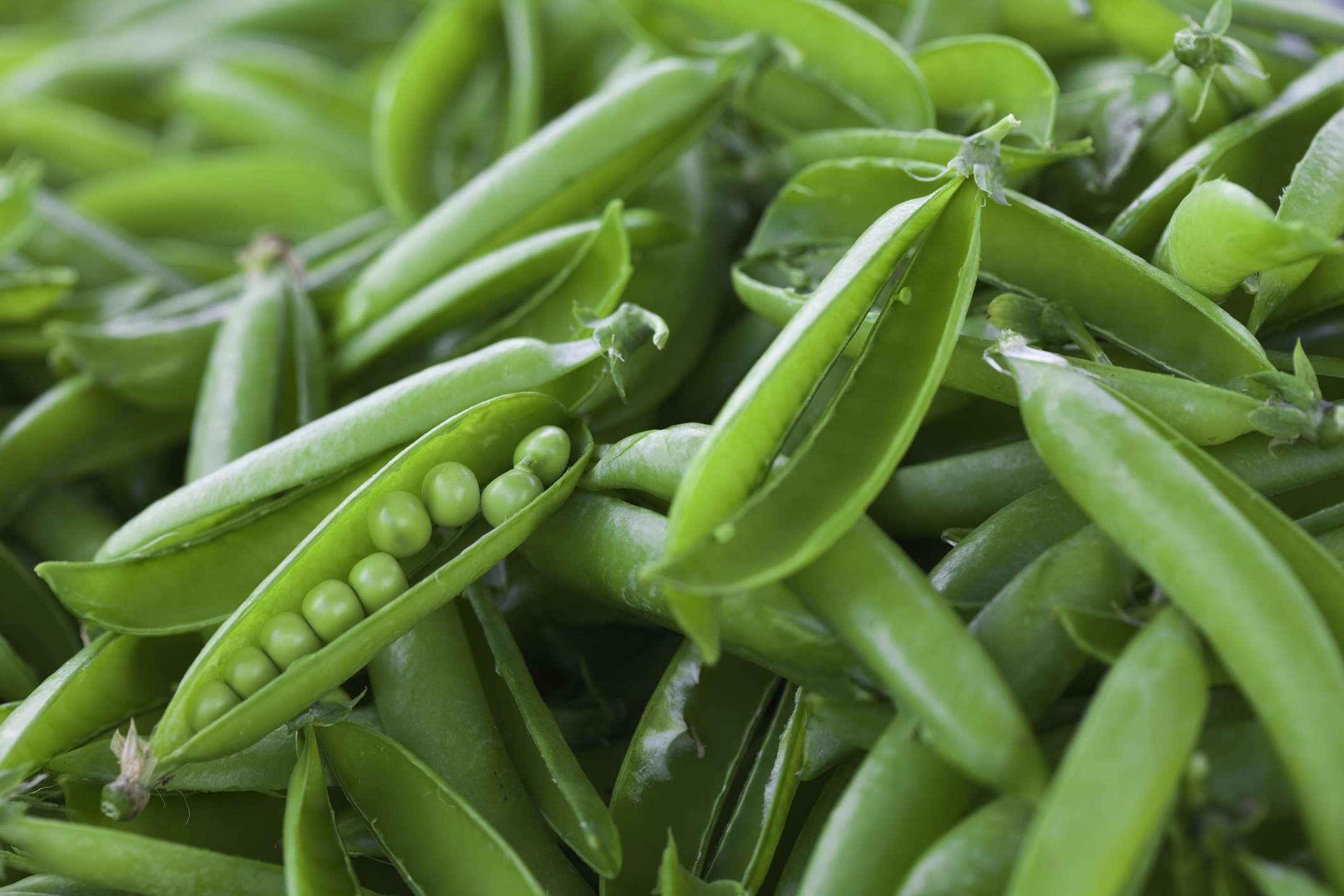 English Shelling Peas