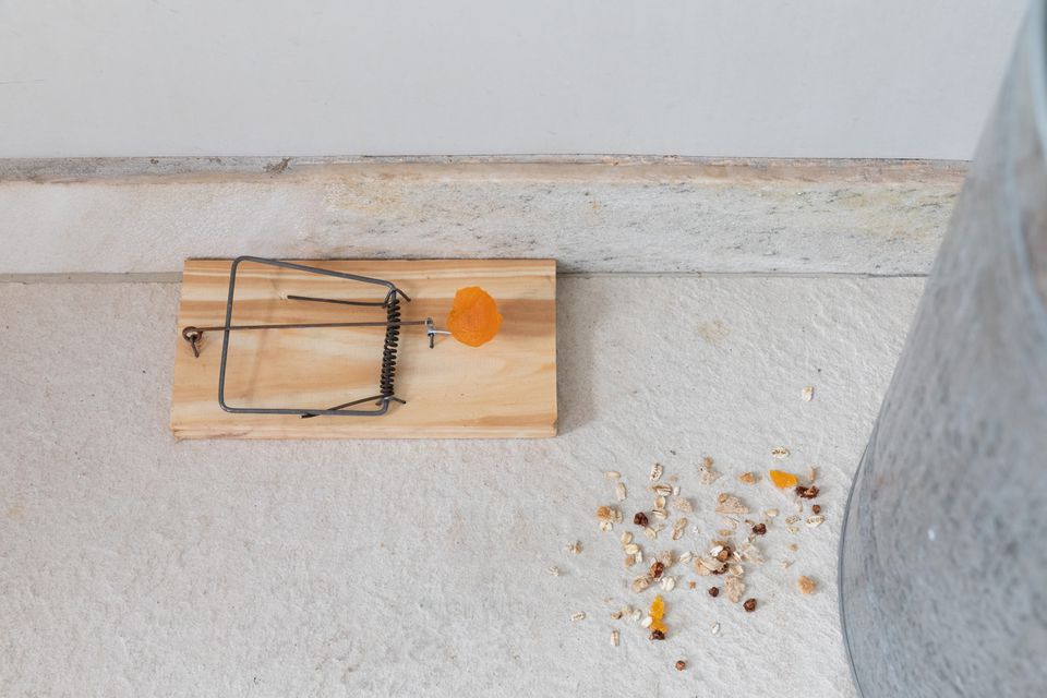 where to place rat traps