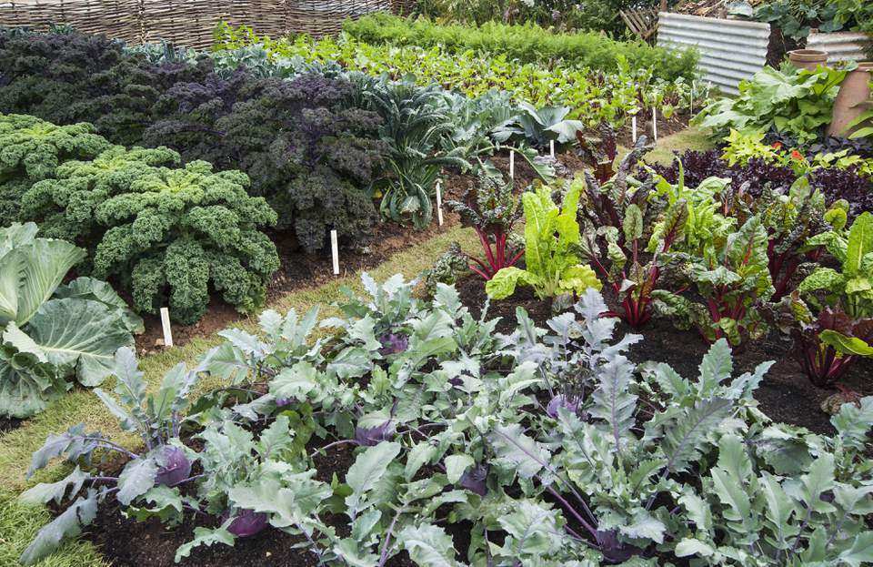 How To Have A Long Producing Vegetable Garden