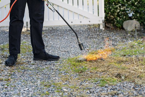 Gas-powered flame weeder on a gravel driveway