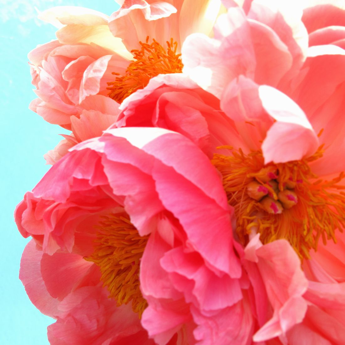 How to Use Flowers for Good Feng Shui at Home
