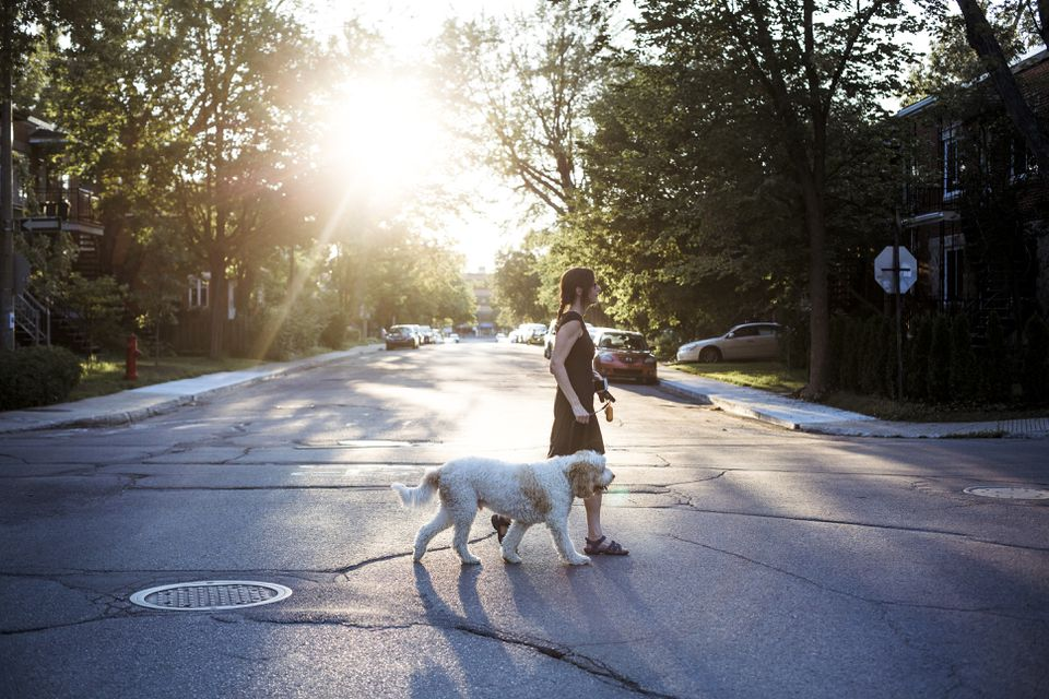 Woman with goden doodle dog walking in the street