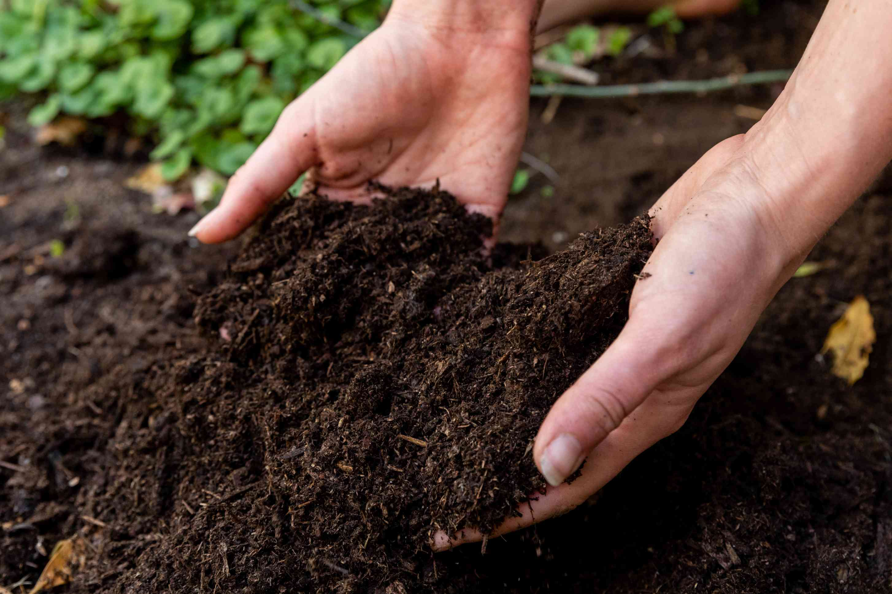Soil picked up from ground by hand for worm soil test