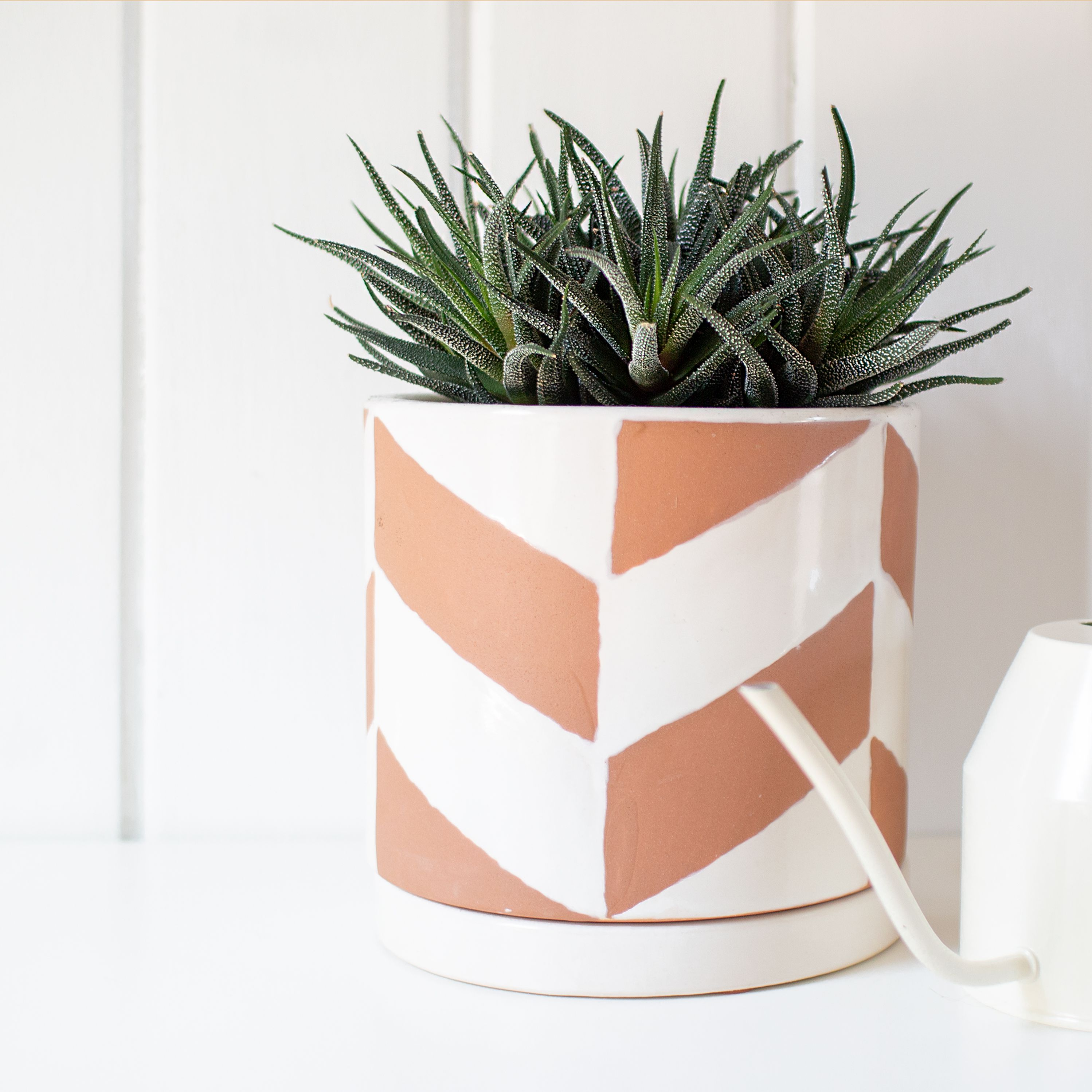 Haworthia Plant Care And Growing Guide