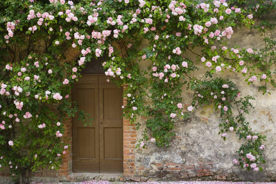 Doorway covered with pink rose flowers.