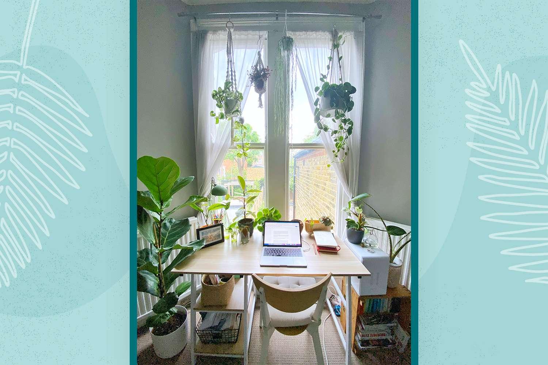 Taylor Fuller's desk with 14 plants