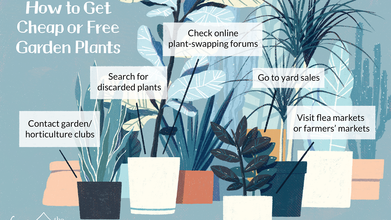 12 Ways To Find Free Or Cheap Garden Plants,Best Places To Travel In The Us In October 2020