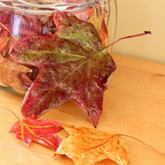 How to preserve fall leaves for decorating