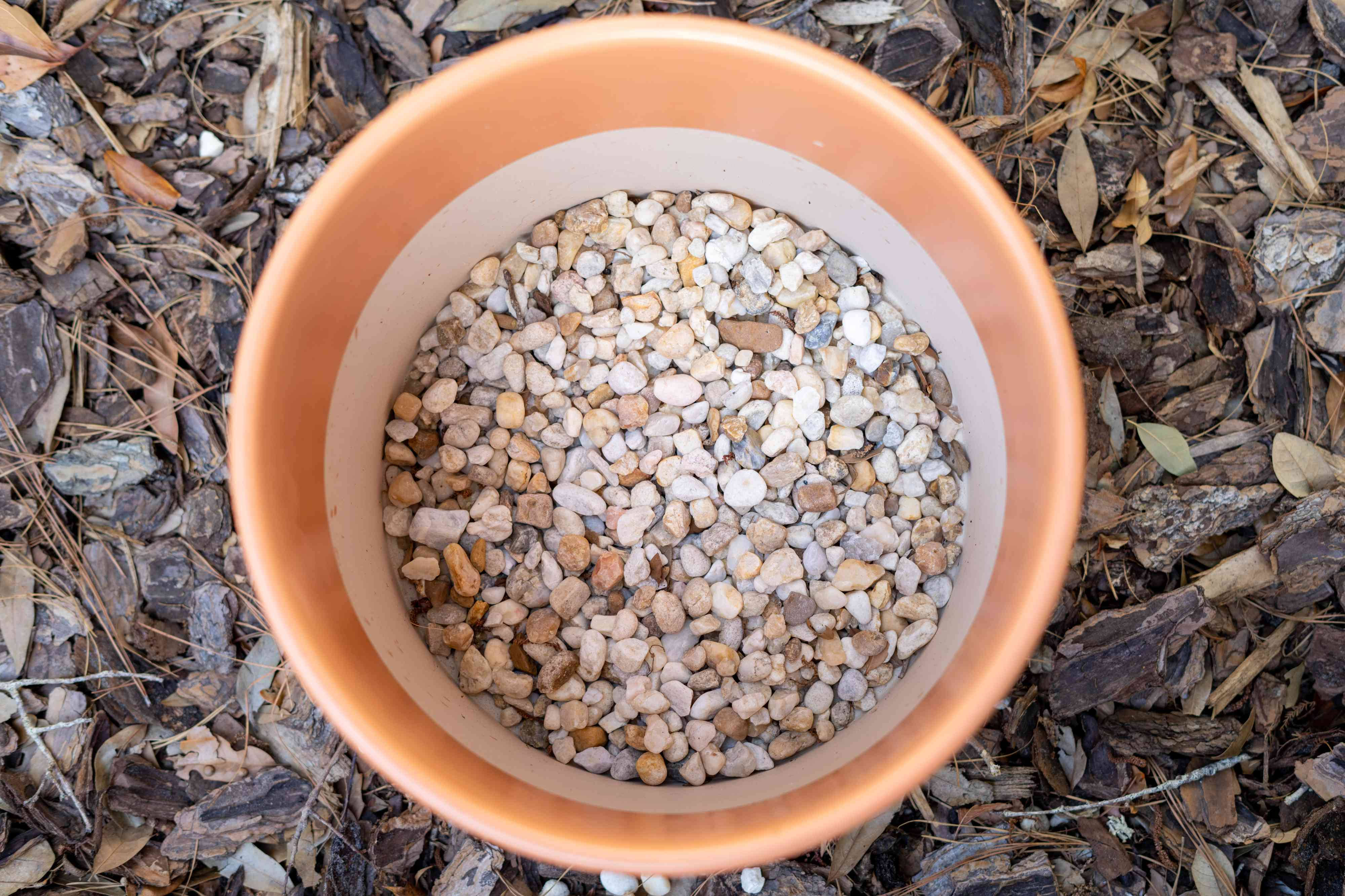 Ceramic pot with small pebbles to help with drainage for potted magnolia