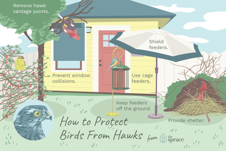 Illustration protecting birds from hawks