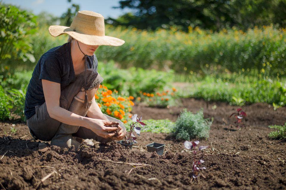 Woman planting herbs in garden
