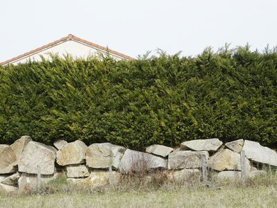 How To Create And Maintain A Low Maintenance Hedge