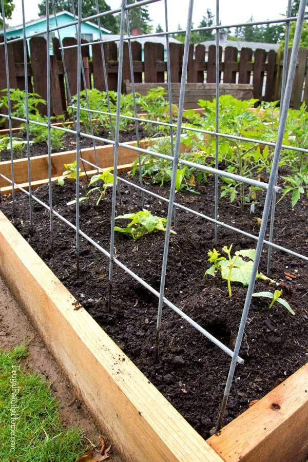 10 diy garden trellises that cost less than 20 diy garden trellis with cattle panels solutioingenieria Image collections