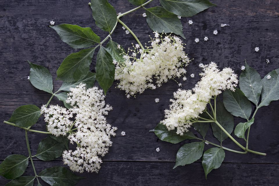 Elderflowers on dark wood, elevated view