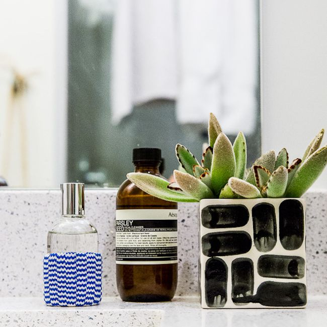 succulent on a vanity