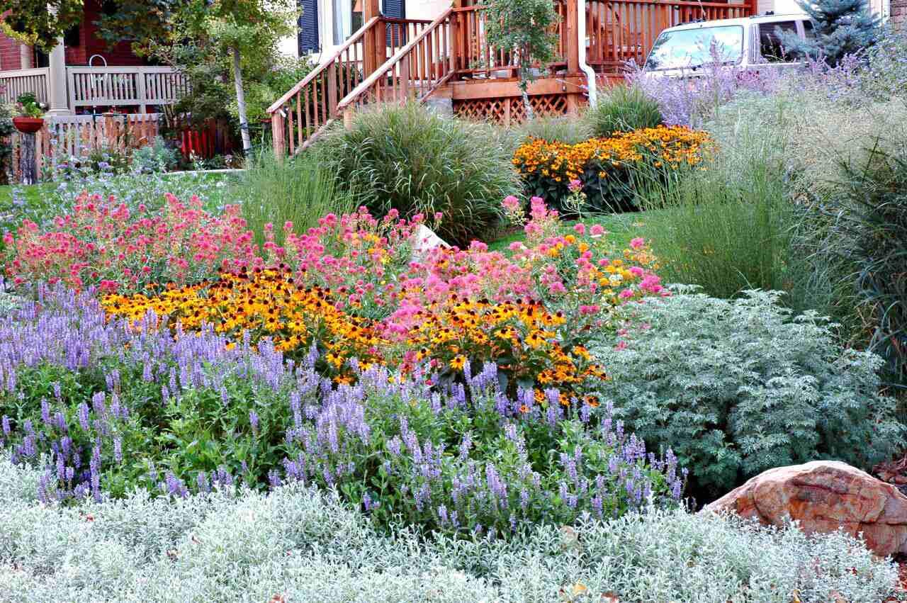 plantas nativas en el patio