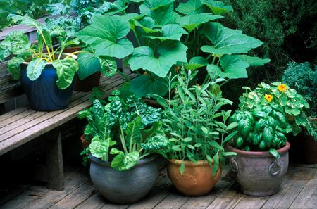 Tips for Growing 10 Types of Vegetables in Containers