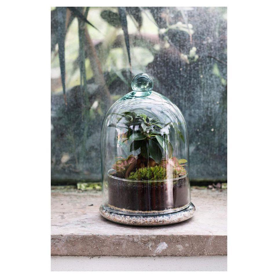 Plant in a terrarium