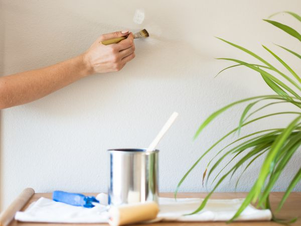 Paint being retouched on wall next to painting supplies and houseplant