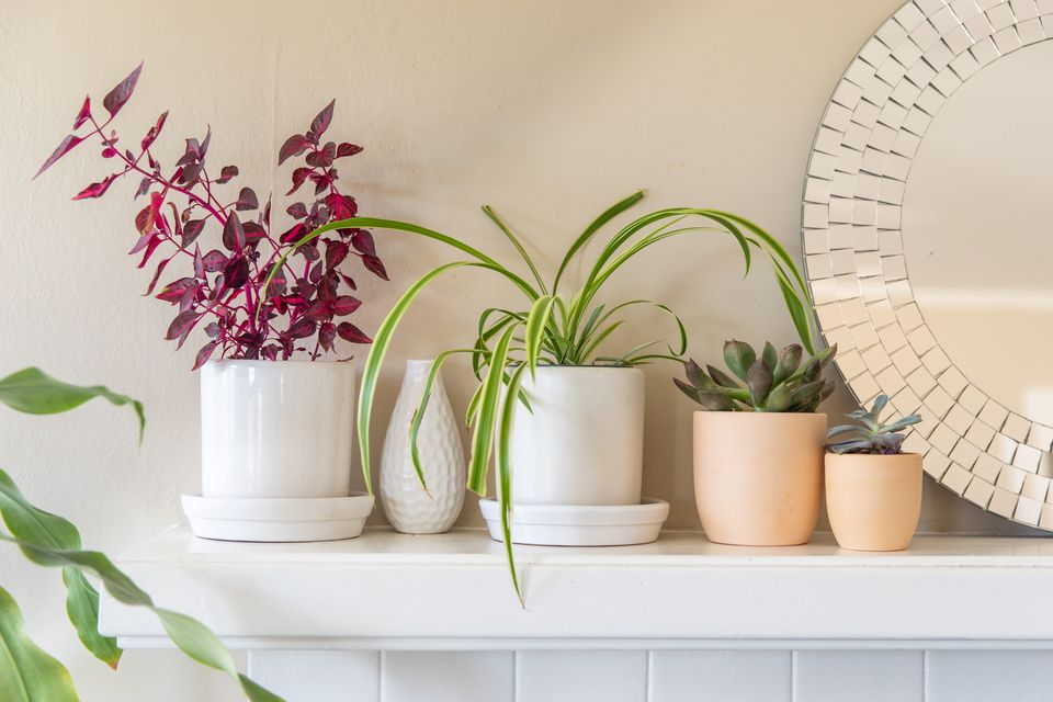 houseplants on a mantel
