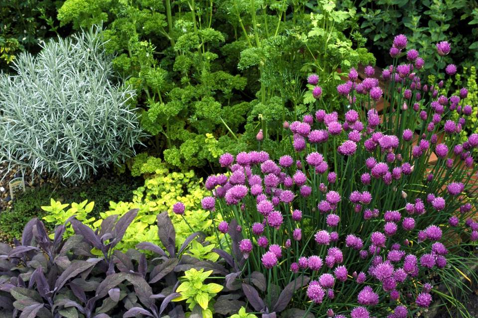 Planning and Planting an Herb Garden – Planning A Herb Garden