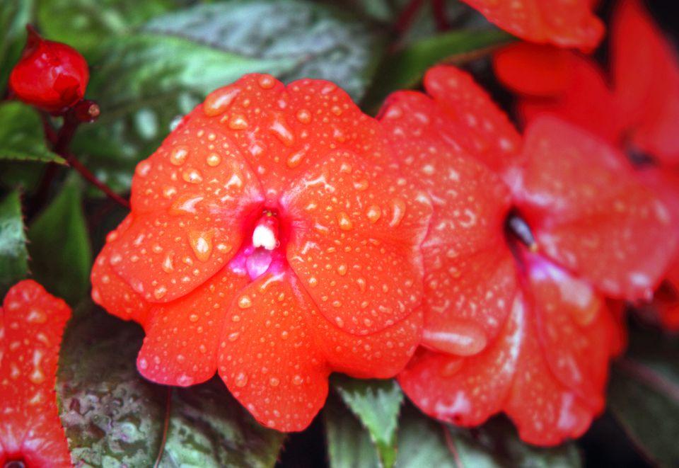 Different Types Of Orange Flowers