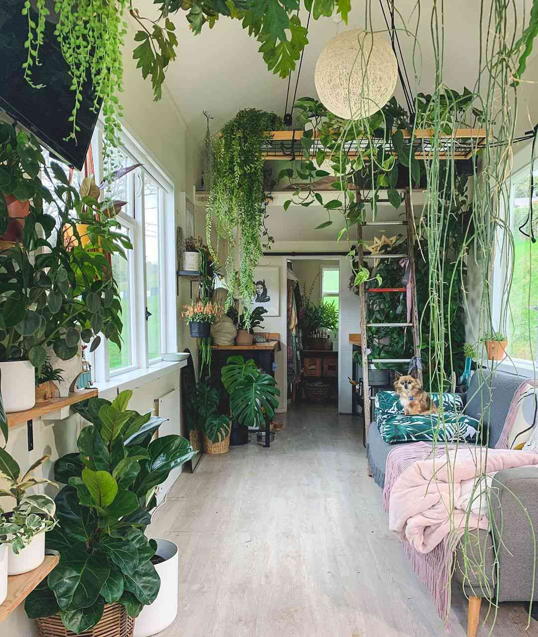 Tiny house filled with plants