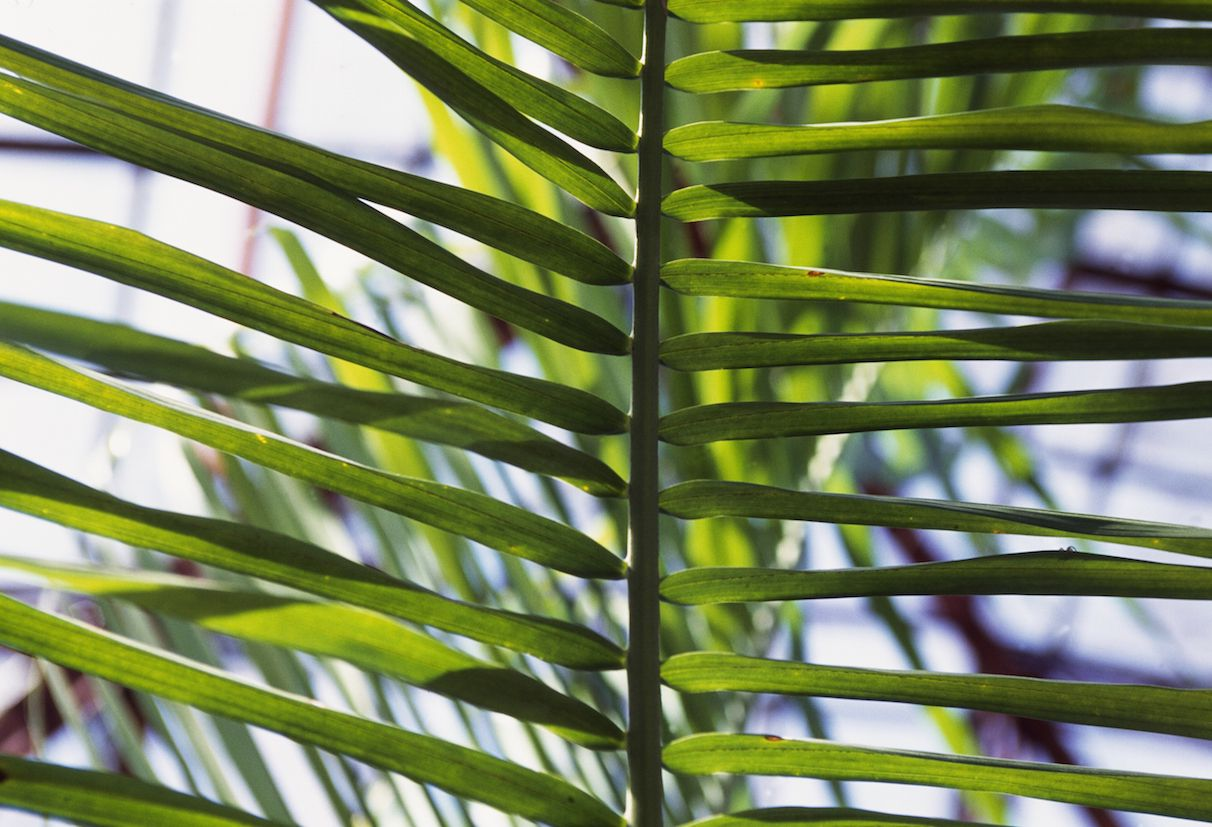 10 Air-Purifying Plants for Feng Shui