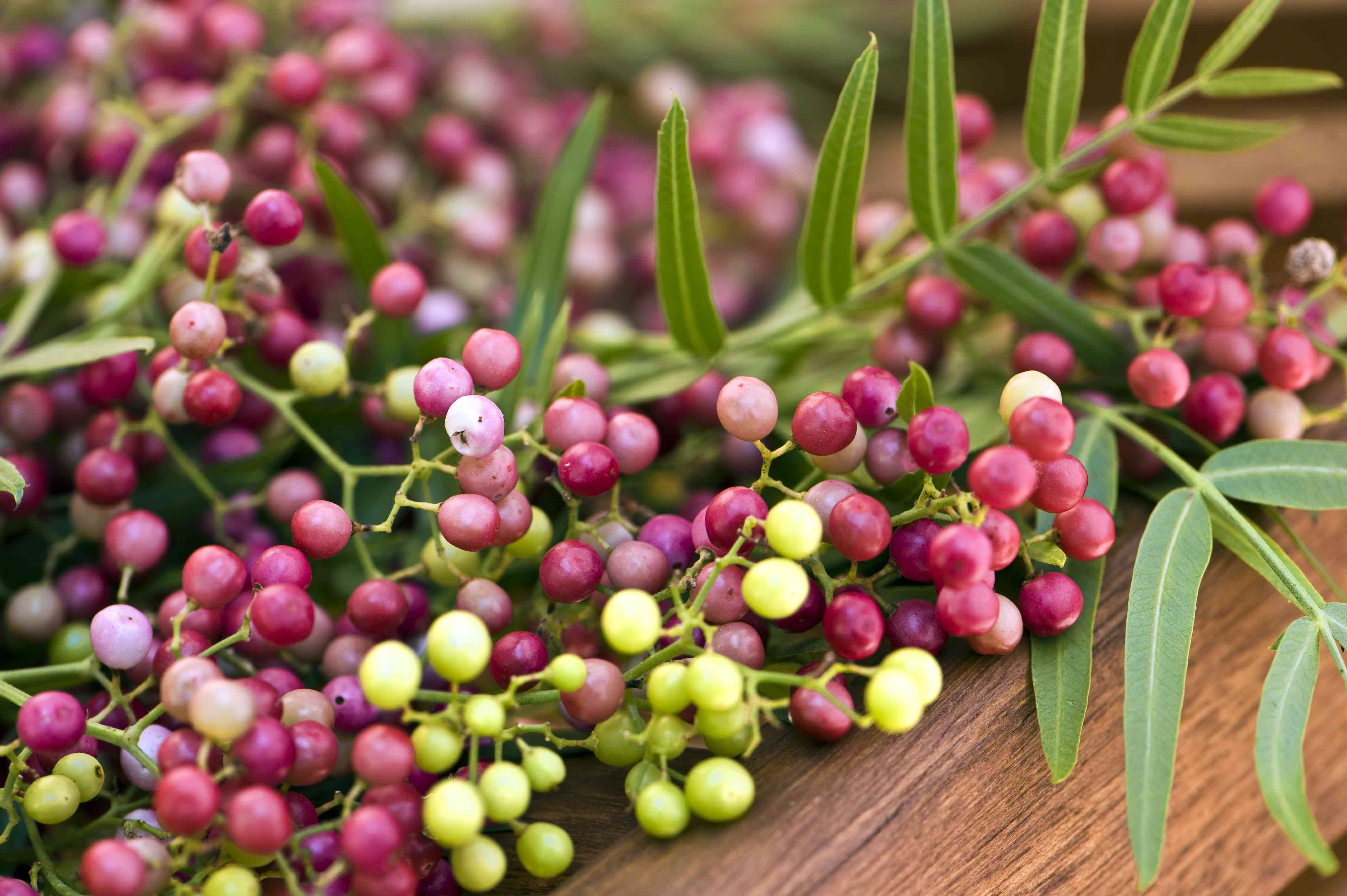 Pink Peppercorn. Color Image