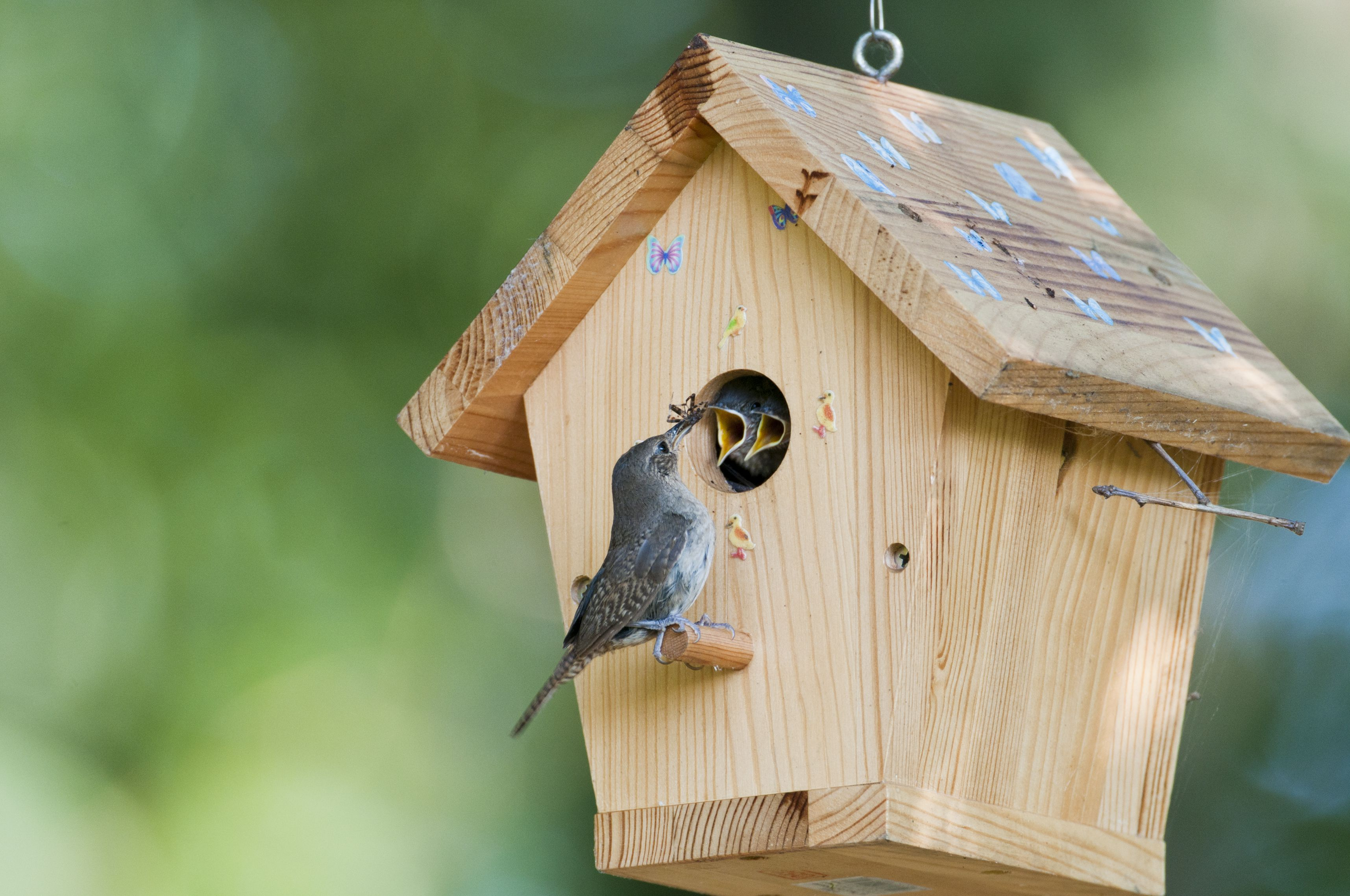 Attract birds with shelter right in your backyard for Types of birdhouses for birds