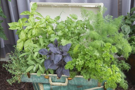 5 Great Herbs To Grow In Pots