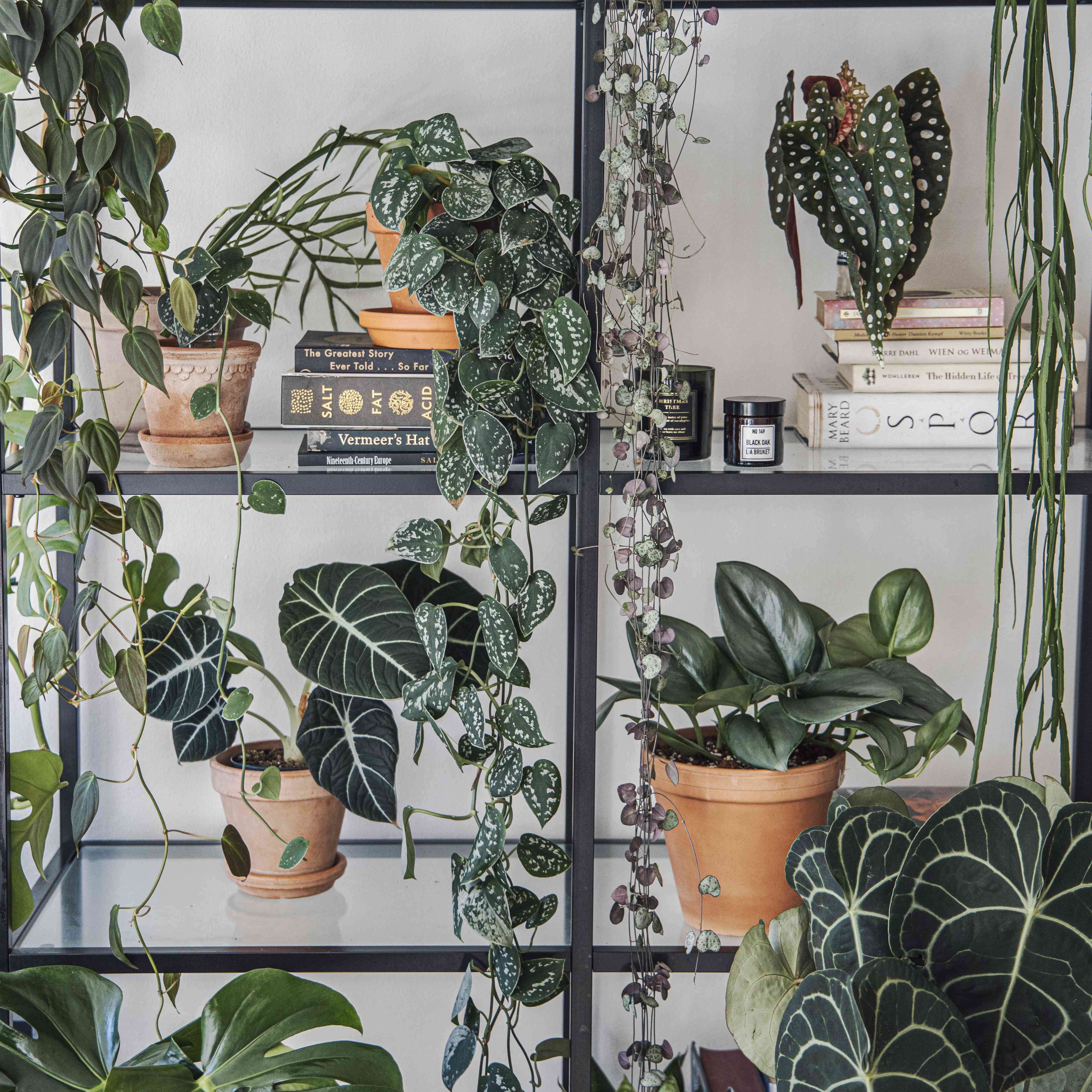 Gorgeous plant shelfie collection by Aina of @planterogplaneter