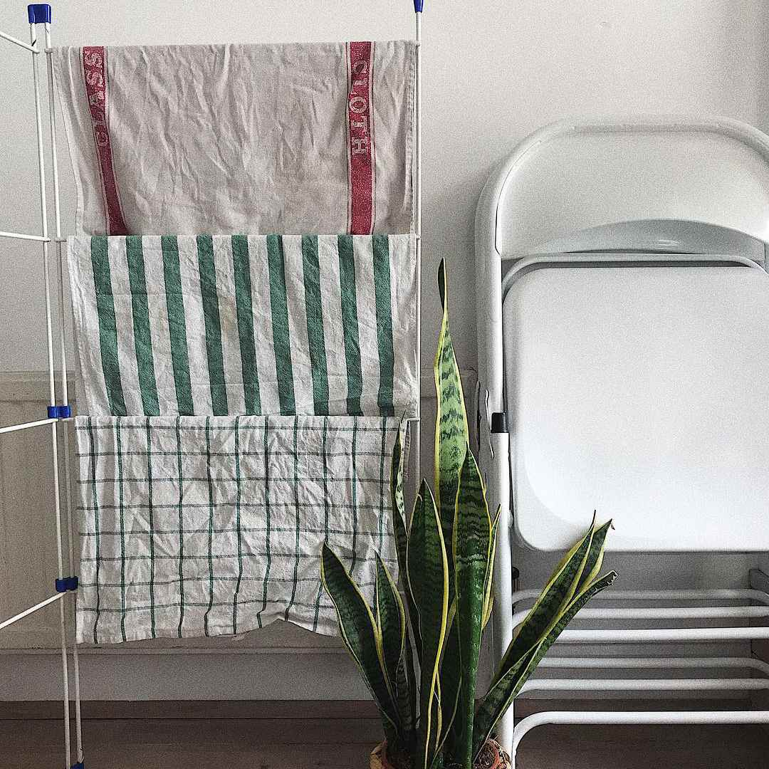 towels air drying by a snake plant