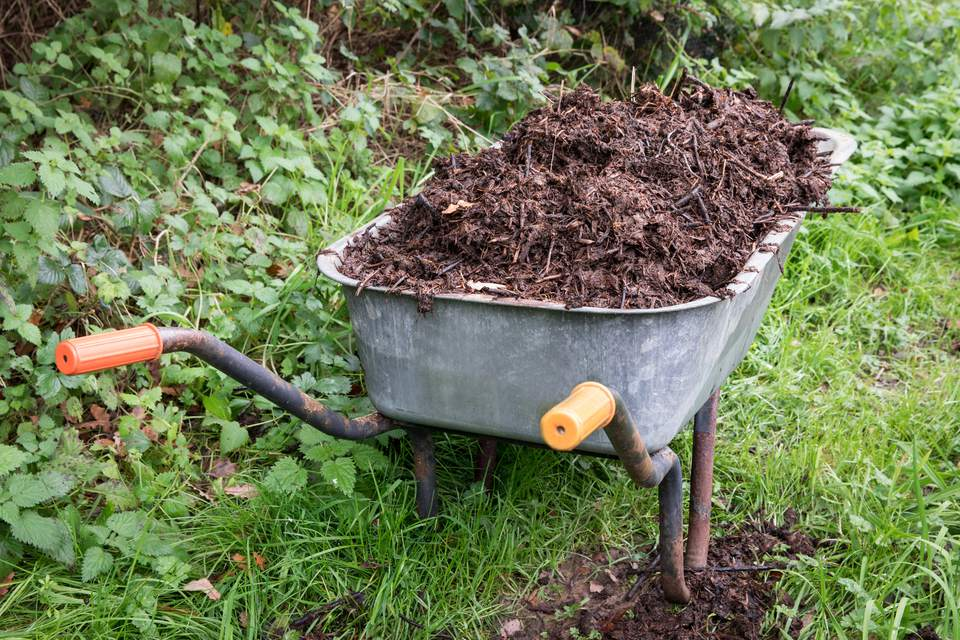 A wheelbarrow of mulch