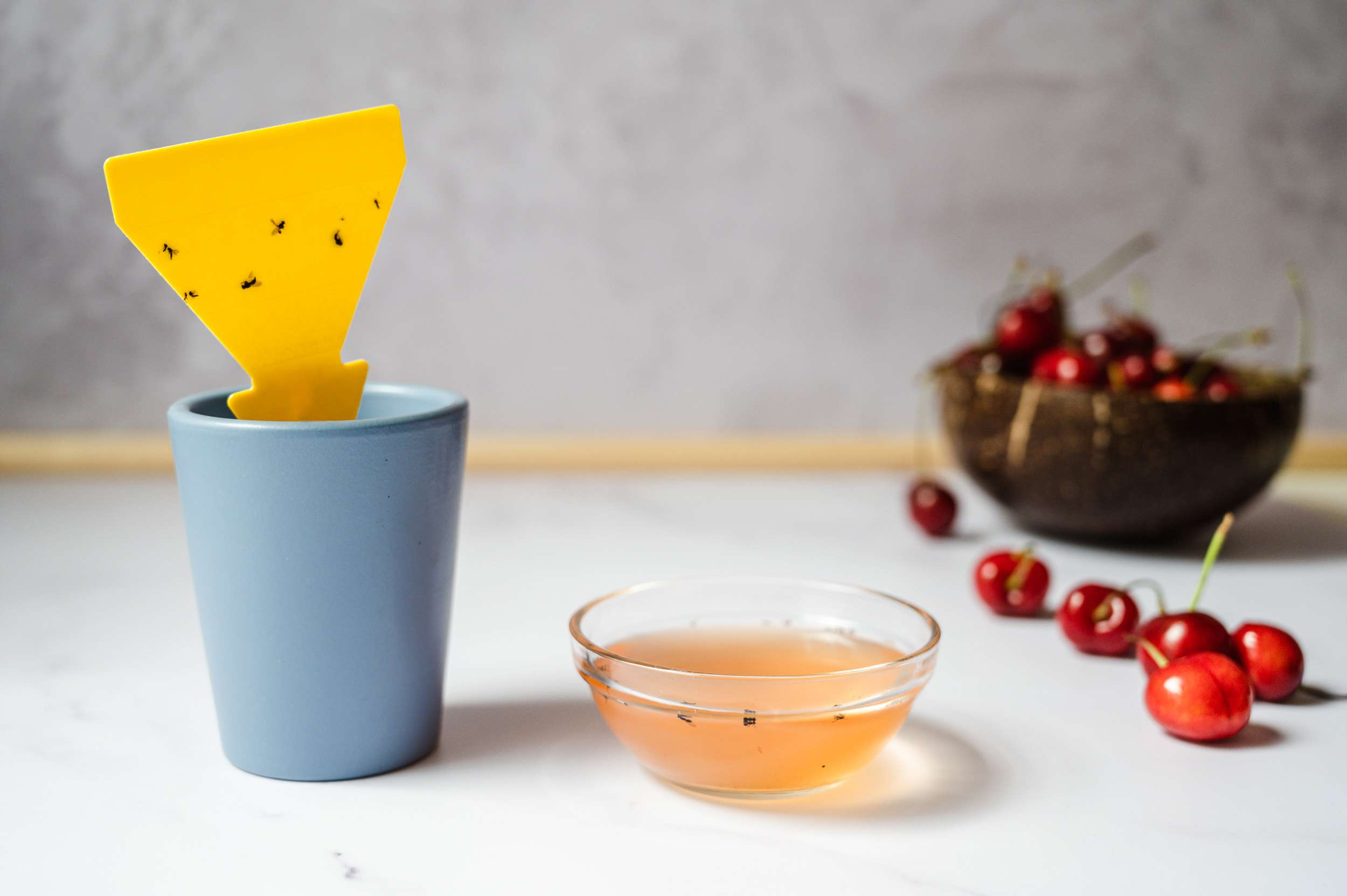 Homemade fly trap with sticky pads and bowl of vinegar next to bowl of cherries