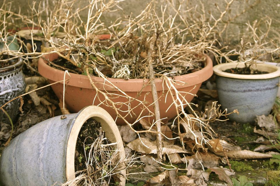 Dead houseplants