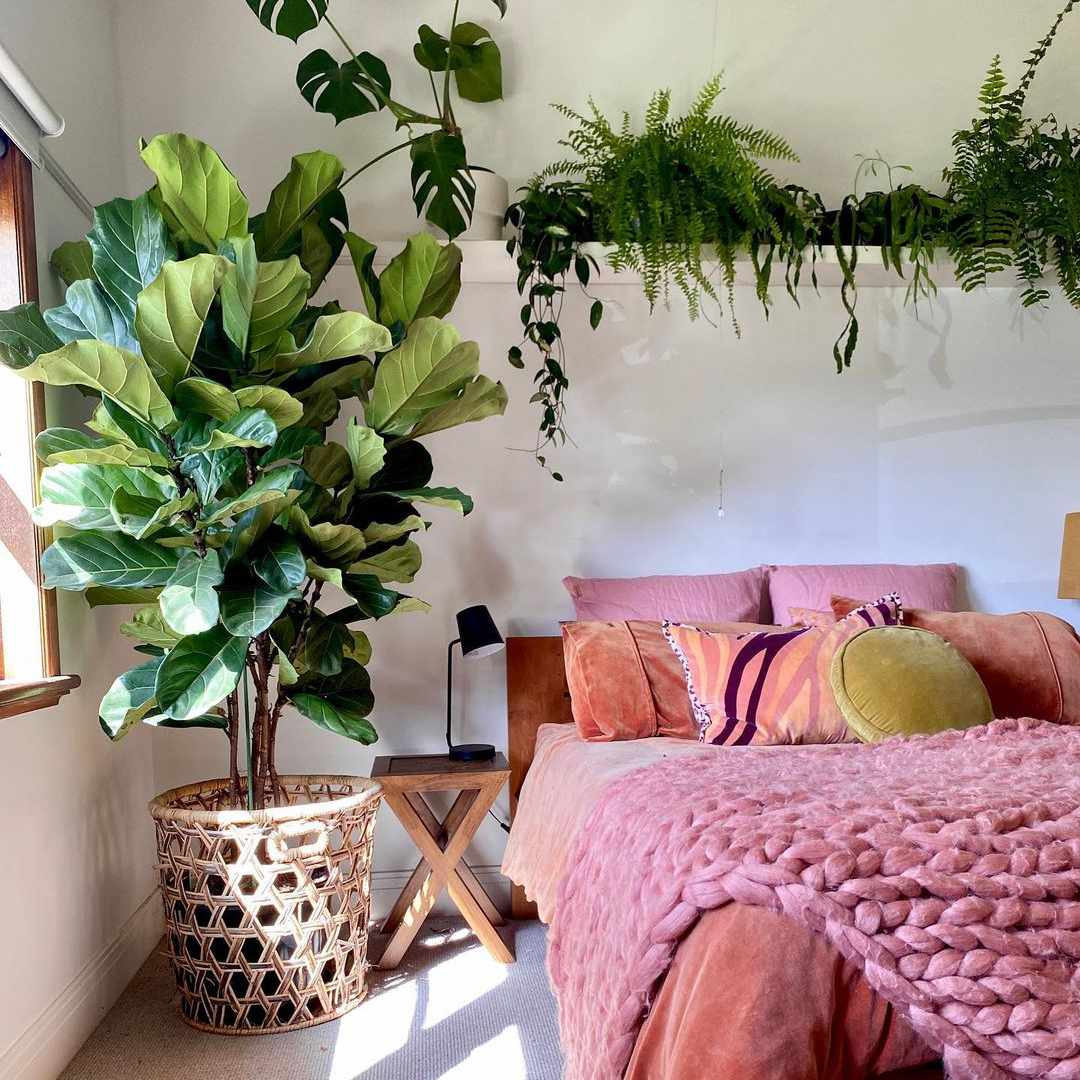 pink and plants
