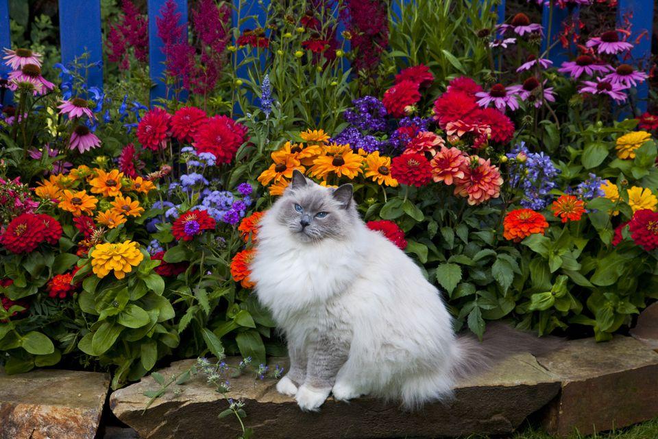 Un gato sentado al lado de una cama de flores
