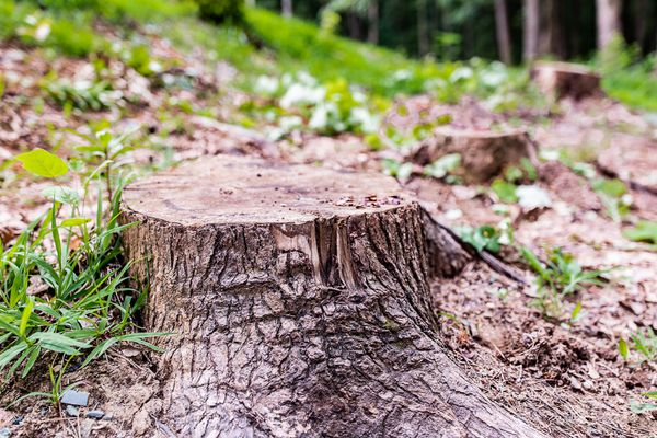 tree stump in a wooded area