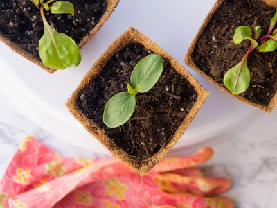 Small containers with plant sprouts next to glove on marbled surface indoors