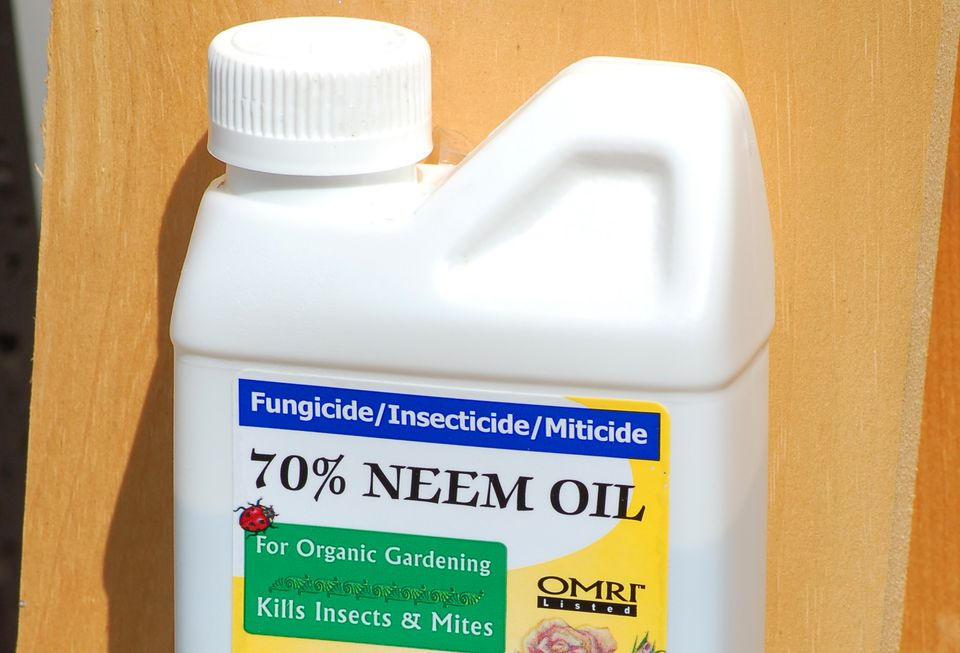 Neem oil container.