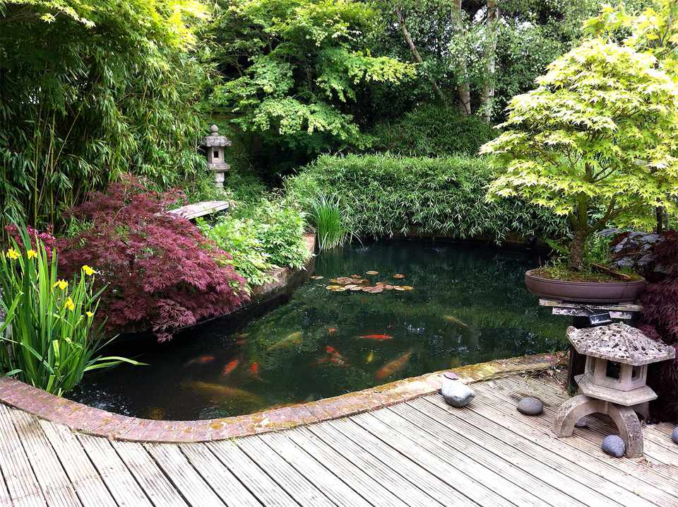 Image of Japanese garden with koi pond, bamboo, maples, bonsai