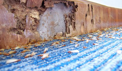 Illustration of damages caused by pests