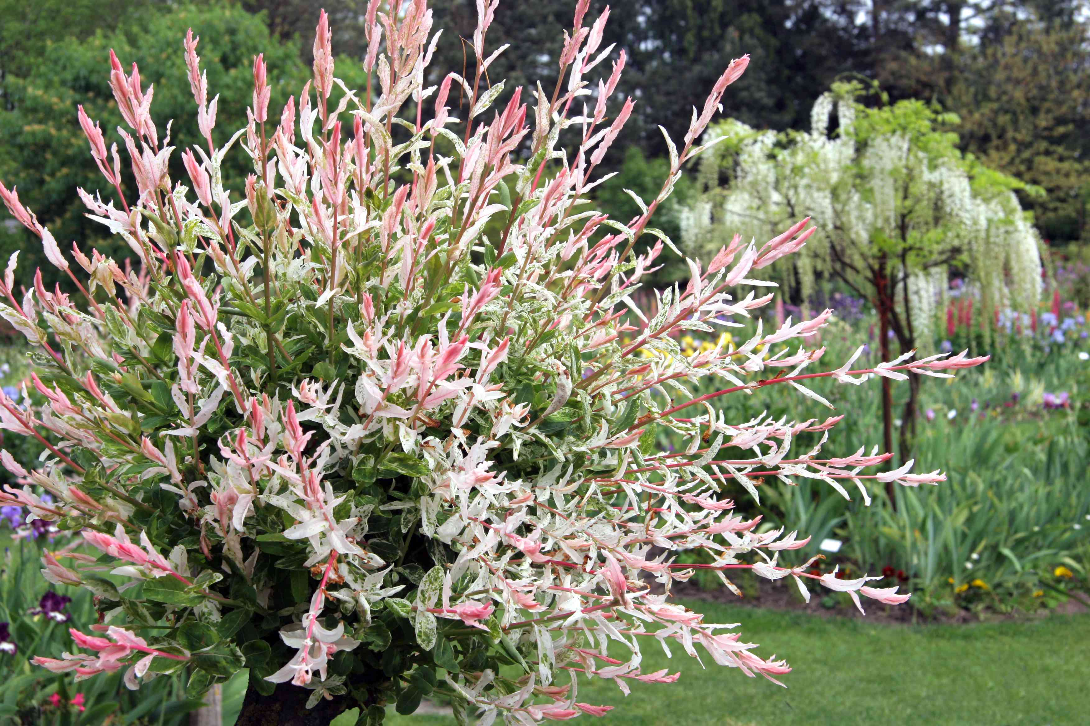 13 Best Shrubs For Full Sun