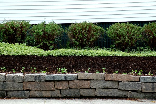 Black mulch and shrubs along a house foundation.